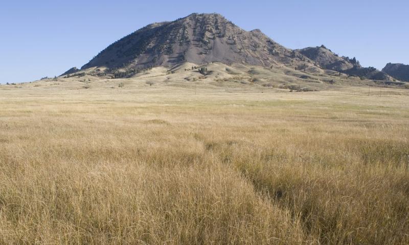 Black plains