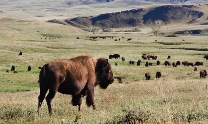 Black Hills South Dakota Tours Guided Alltrips