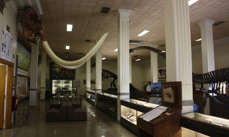 fossils at the museum of geology