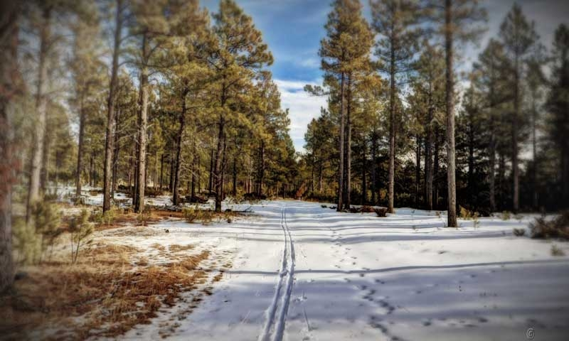 Cross Country Skiing in the Black Hills